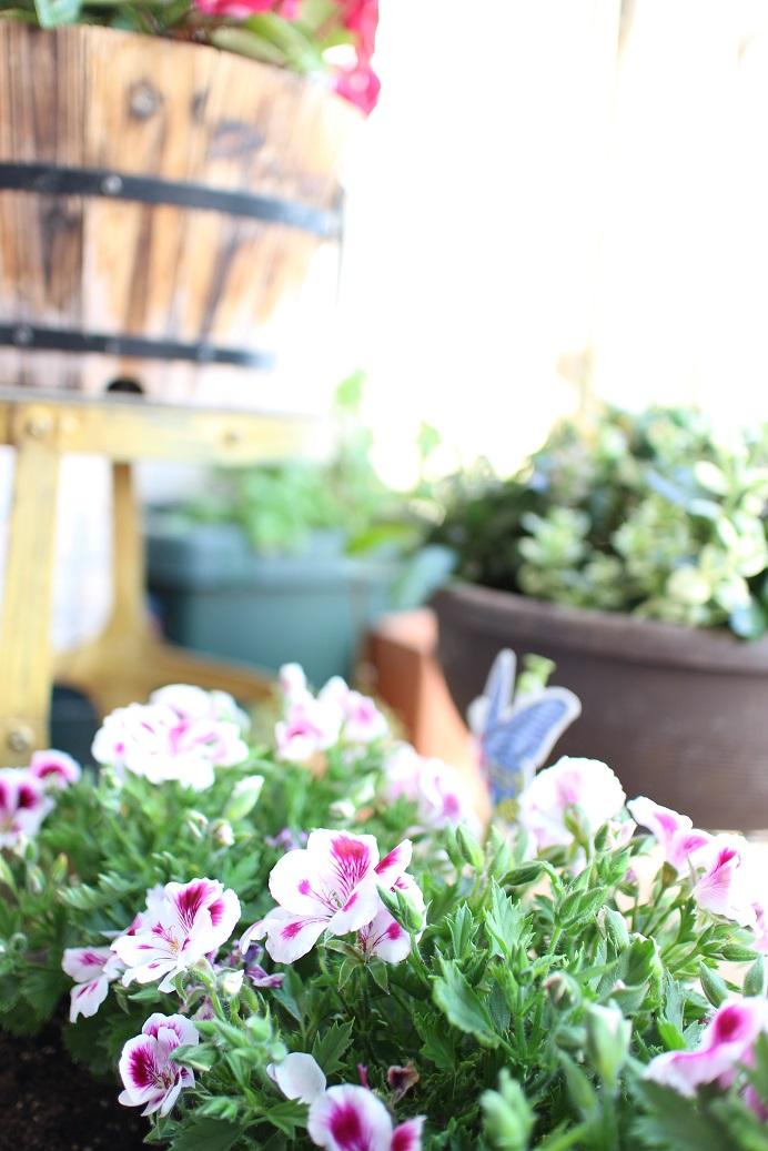 ミラーレス一眼カメラでベランダお花を撮影♪
