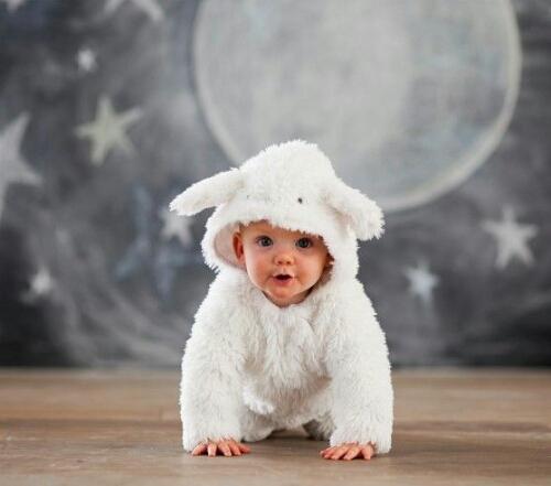 bf620473caca5 2015年の干支は羊!赤ちゃんひつじを年賀状写真に。