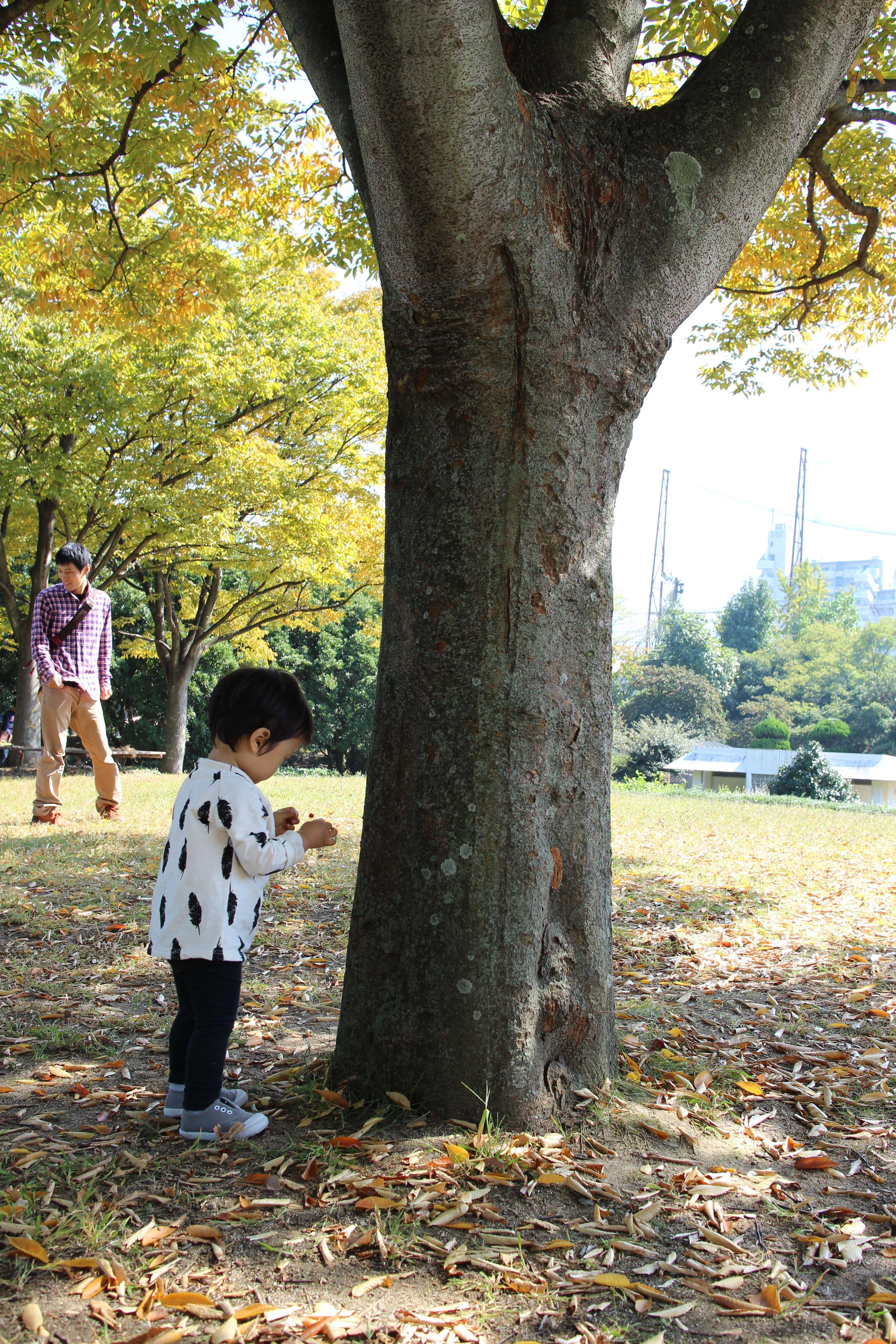 秋の公園でお弁当を食べよう。