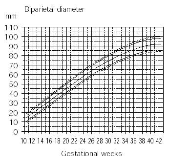 胎児の超音波数値の平均