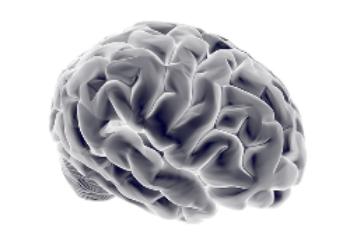 子育てがつらいのは脳のせい?みんなに知って欲しい人間の真実。