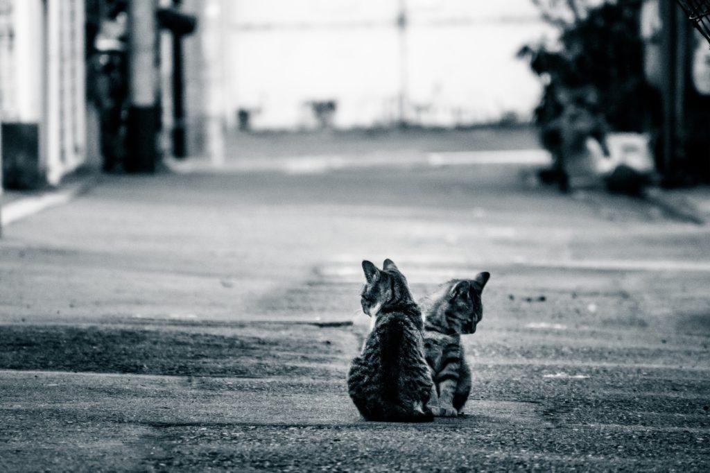 妊婦と猫の奇妙な関係