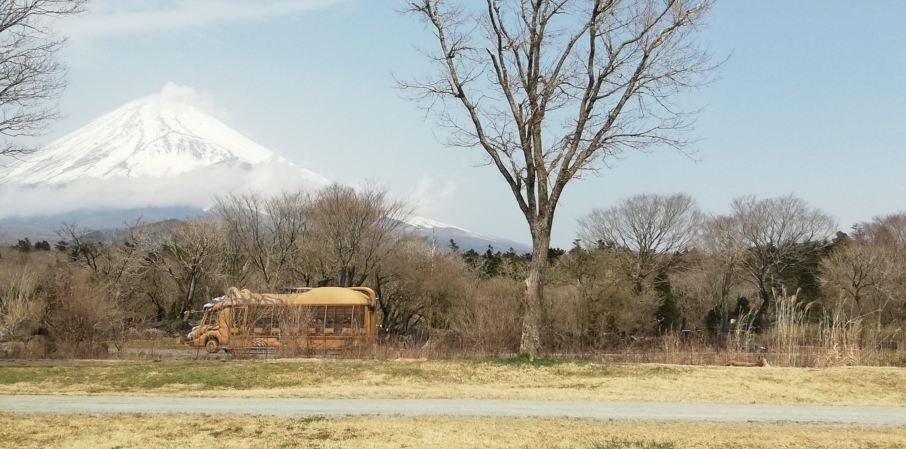 家族だけの空間で楽しめた富士サファリパーク。